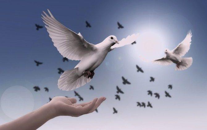 """""""A boa política está a serviço da paz"""", tema do Dia Mundial da Paz 2019"""
